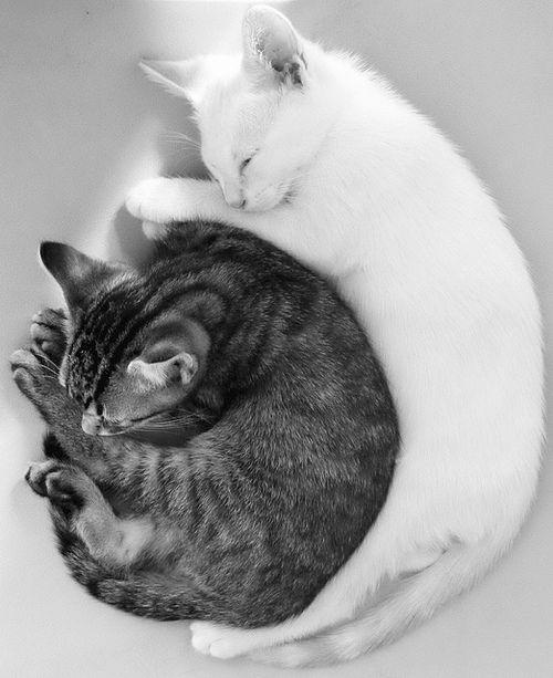 spooning_cats.jpeg